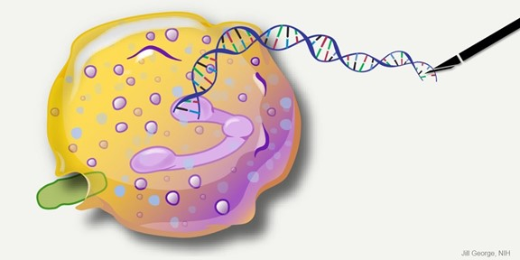 Find and Replace: DNA Editing Tool Shows Gene Therapy Promise