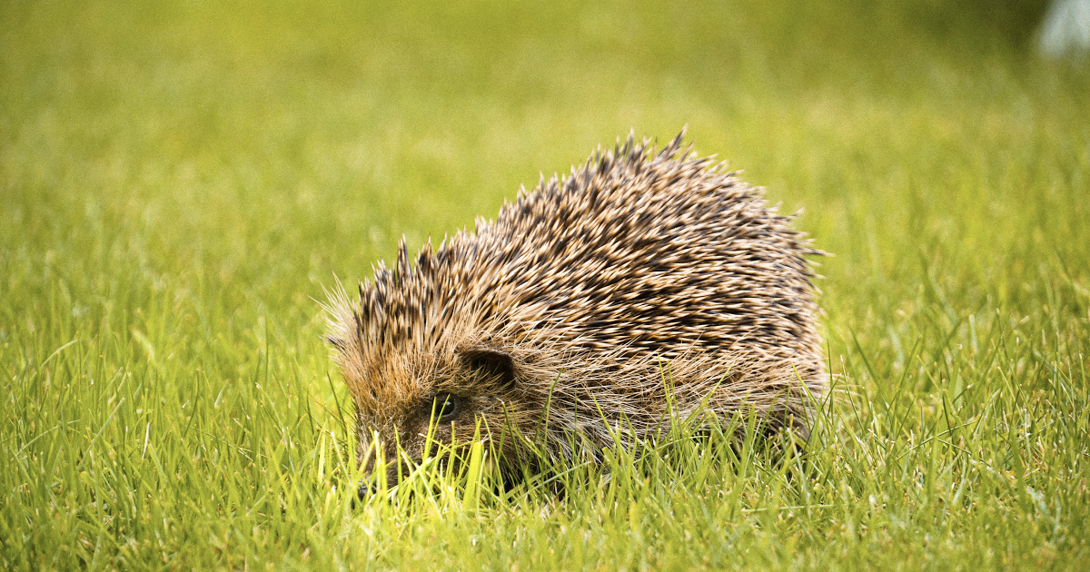 What's a Hedgehog Got to Do with Condensed Matter Physics?