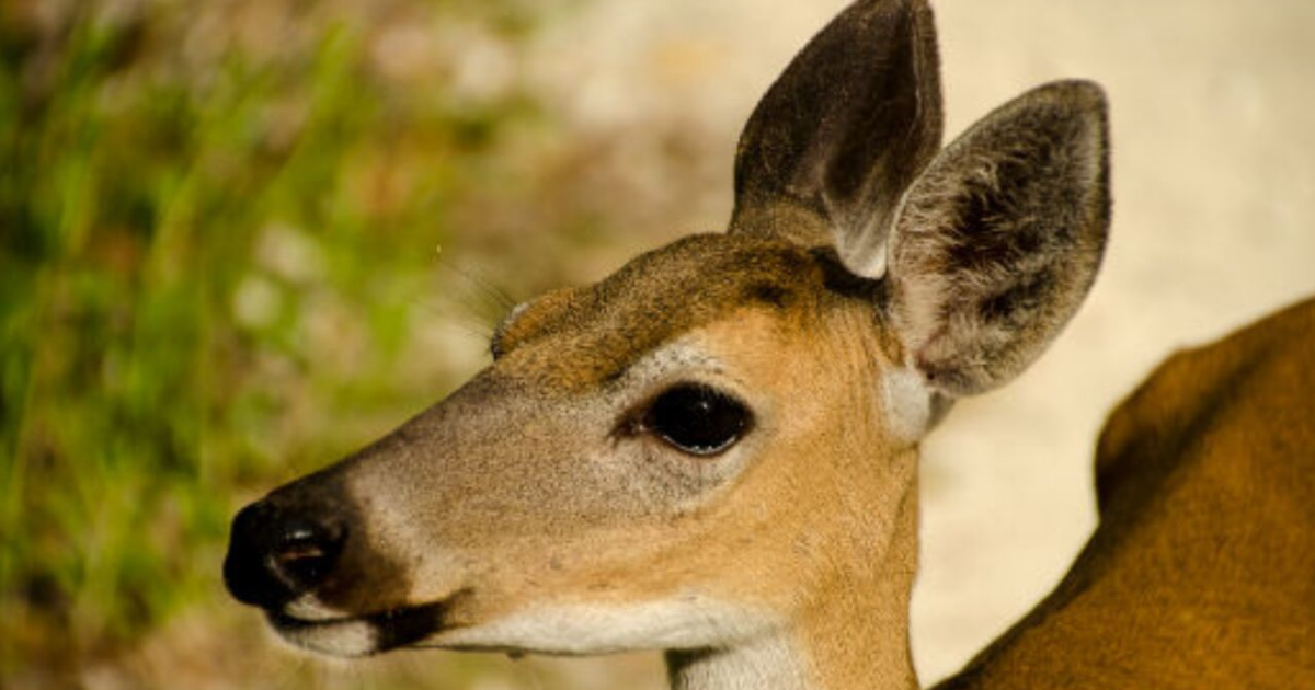 Emergency order issued to restrict movement of deer from facilities where CWD has been detected