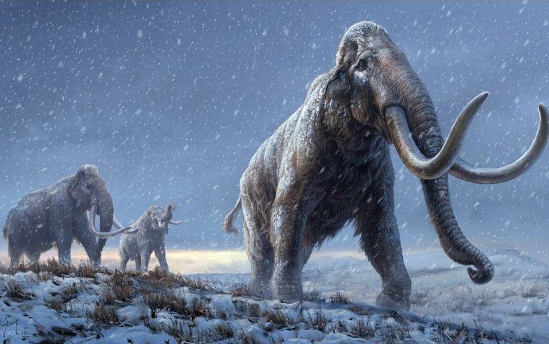 Mammoth Genomes Shatter Record for Oldest DNA Sequences