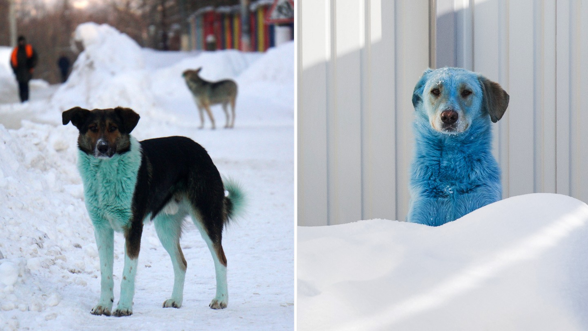 Remember the Blue Dogs From Russia? Now Look at These Green Dogs From Russia
