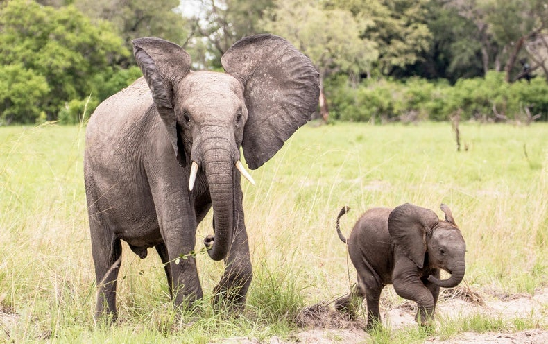 The First 'Google Translate' for Elephants Debuts