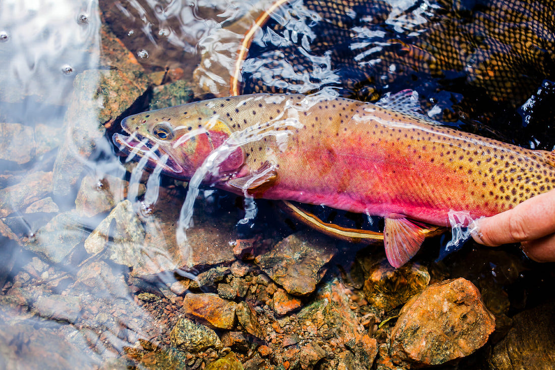 What Drought Means for Fishing in the Colorado River Basin and the West