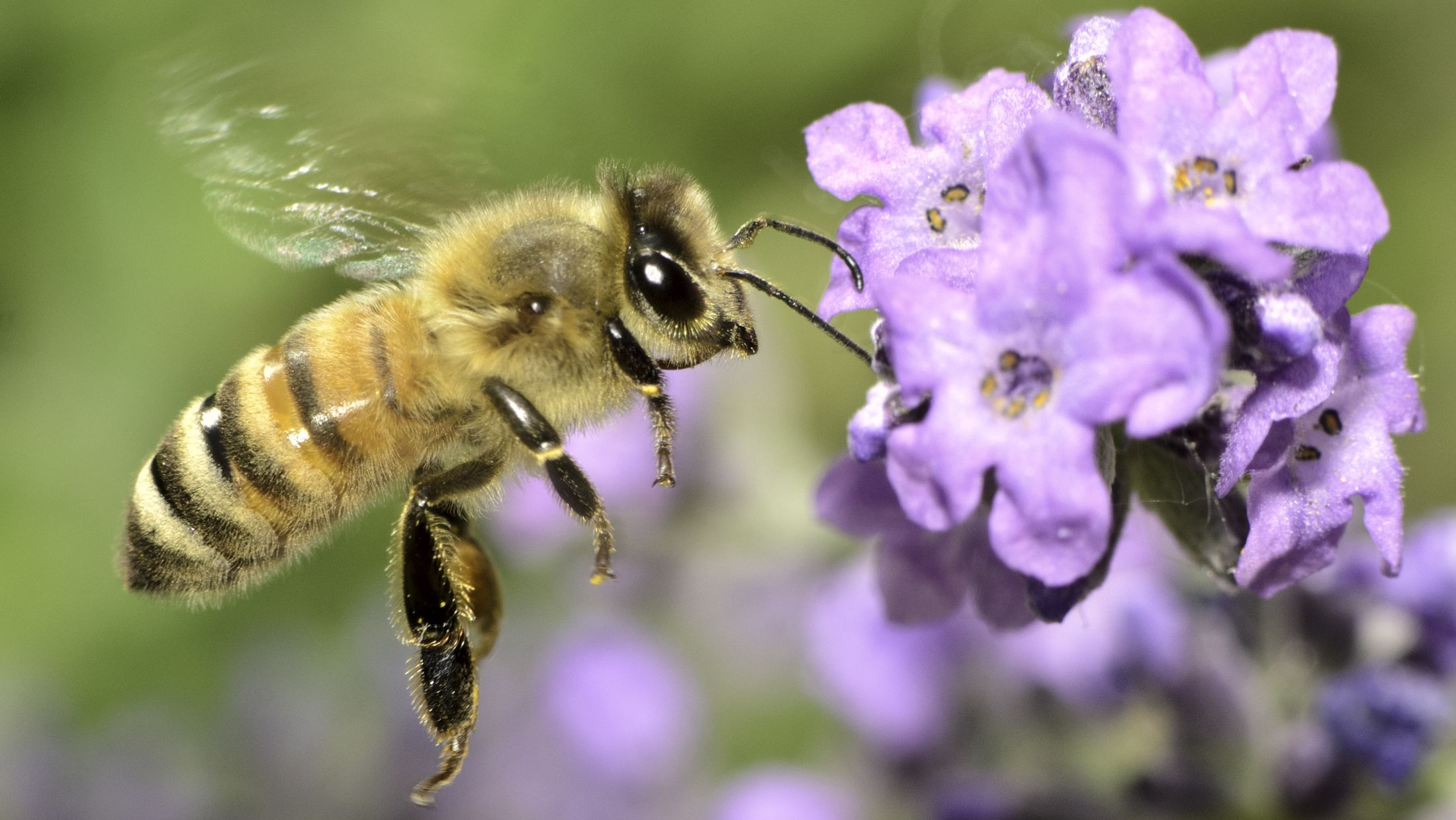 13 Fascinating Facts About Bees