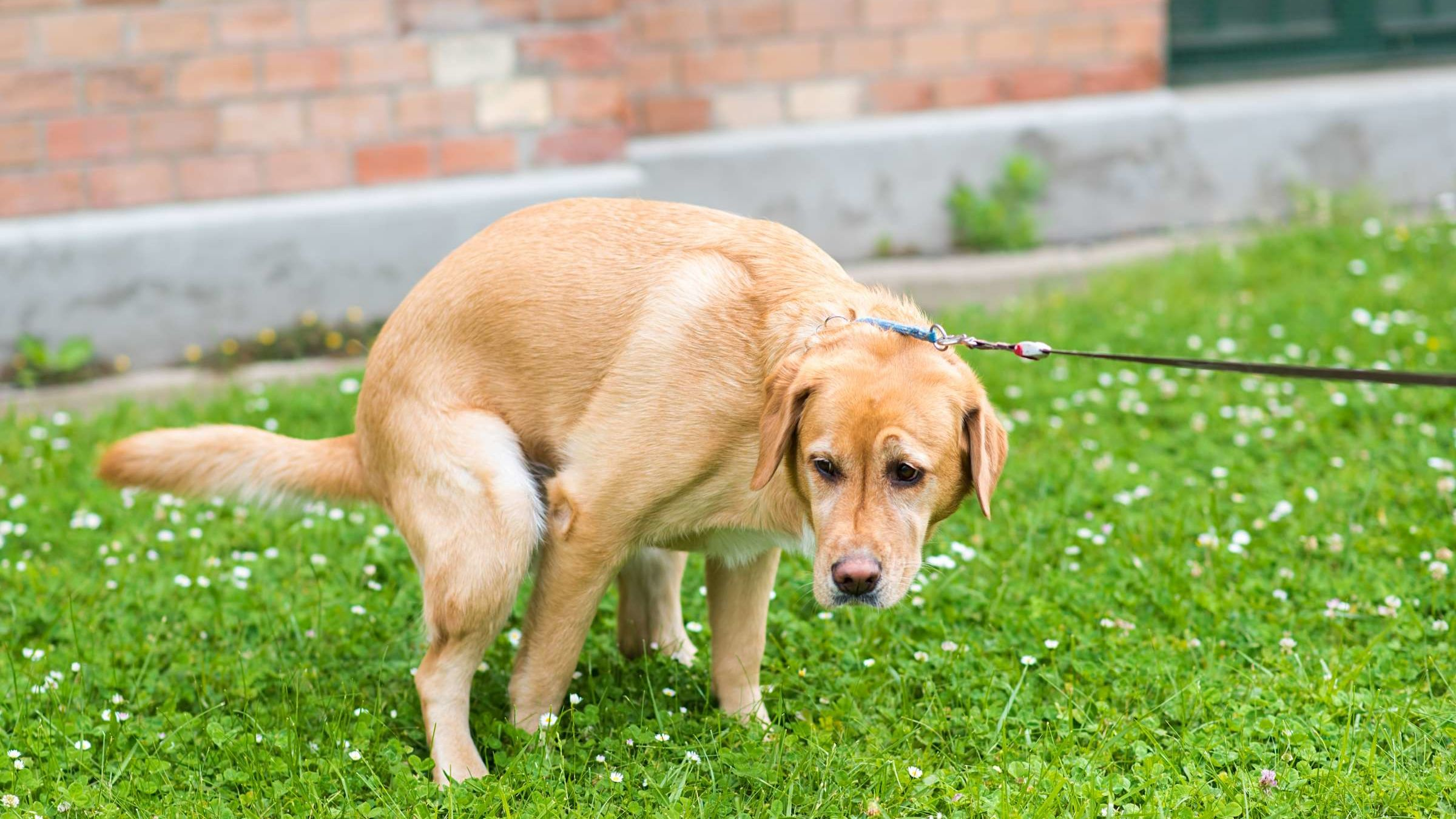 What Happened to the White Dog Poop That Used to Be Everywhere?