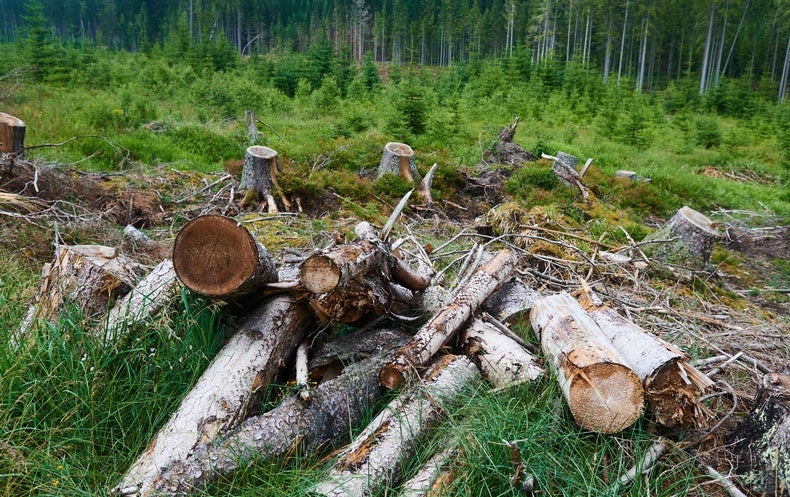 European Forests Have Become More Vulnerable to Insect Outbreaks